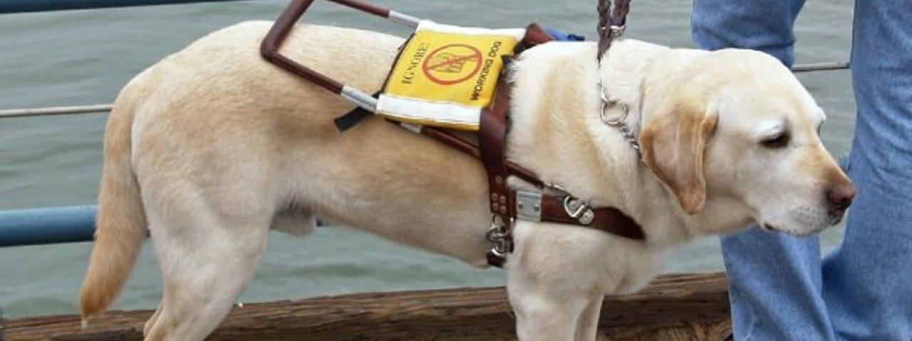 Il grazie della Scuola Cani Guida di Firenze per la somma donata in memoria di Fulvio Doglio