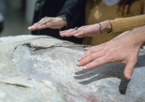 Fondazione Sandretto Re Rebaudengo. Mani esplorano un'opera dell'artista Berlinde De Bruyckere